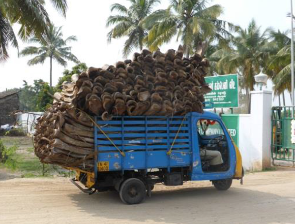 A truck transporting raw material for bioenergy production in India