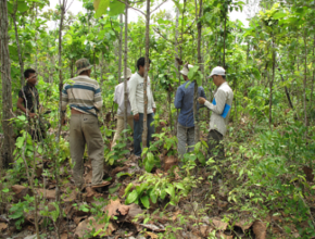 A group of experts in forest in Cambodia
