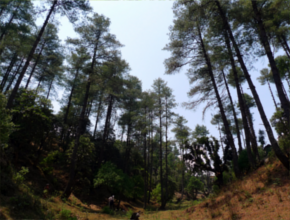 Forest in Terai Arc Nepal