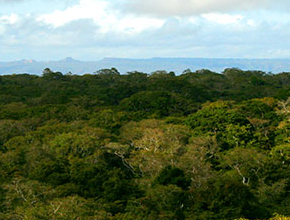 Landscape of tropical forest in Tanzania